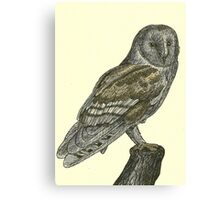 Barn Owl Pen Drawing Canvas Print