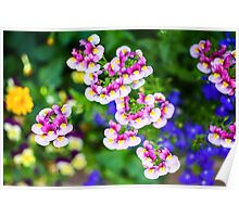 flowering garden. Red, white and pink blooming flowers Poster
