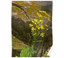 Yellow Rock Flower Poster