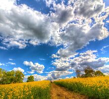 Footpath Through The Farm by DavidHornchurch