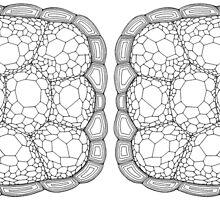 Tortoise Shell by ninarossello