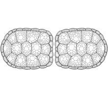 Tortoise Shell Photographic Print