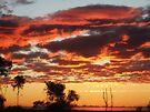 """""""Citras Dawn"""" by debsphotos"""