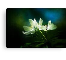 Apple Blossom - Two Flowers Canvas Print