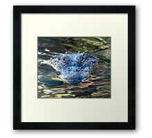 Alligator Watching from the Water Framed Print