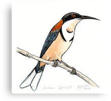 Eastern Spinebill Canvas Print