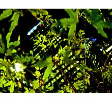 Corporate Jungle Photographic Print
