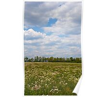 Field of Flowers N Clouds Poster