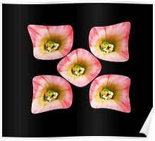 Flowers Irish Design Poster