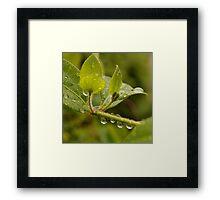 Droplet 1 Framed Print