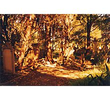 Golden Graveyard Photographic Print