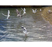 feeding flock Photographic Print