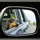 Subjects In Mirror Are Closer Than They Appear by Bine