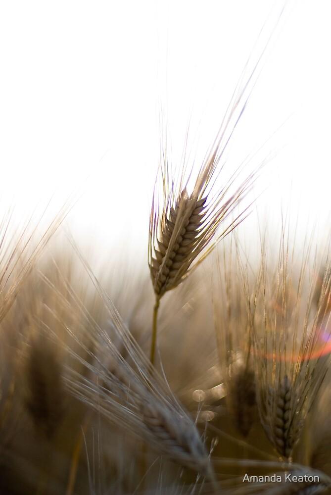 A Successful Harvest by Amanda Keaton