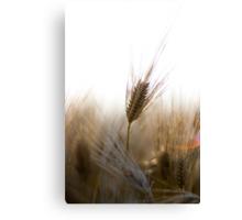 A Successful Harvest Canvas Print