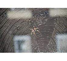 Deadly Spider Photographic Print