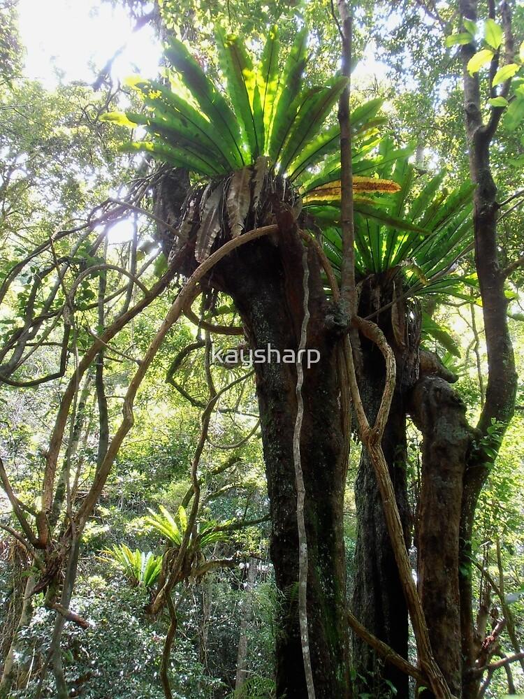 Rainforest, Minnamurra Falls, Illawarra, Australia. by kaysharp