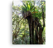 Rainforest, Minnamurra Falls, Illawarra, Australia. Canvas Print
