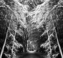 Fantasy Land by Svetlana Sewell