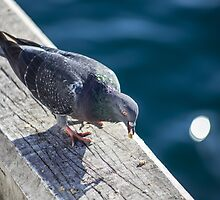 Pigeon On The Docks by Matt Fricker Photography