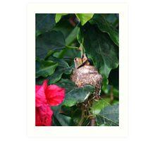 Nesting Hummer Art Print