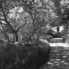 Hornburn, Prenderguest, Scottish borders by Tasha  Blackmore