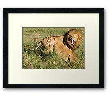 Masai Mara Lions, Kenya Framed Print