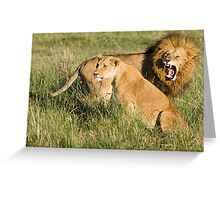 Masai Mara Lions, Kenya Greeting Card