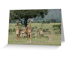 Giraffes, Masai Mara, Kenya Greeting Card