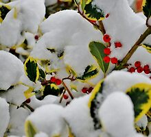 Snowy Holly by Tinyevilpixie1
