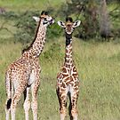 Baby Giraffes, Masai Mara, Kenya by Craig Scarr