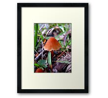 A Little Fungi... Framed Print