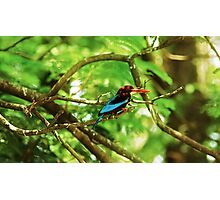 White throated Kingfisher #1 Photographic Print