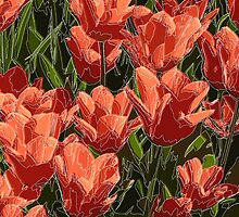 red tulips white lines by hennigdesign
