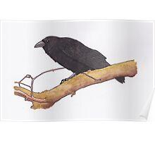 Hugin- raven Poster