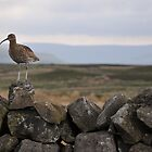 Curlew by Lindamell