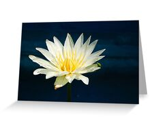 White and Yellow Water Lily Greeting Card