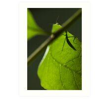 curious mantis Art Print