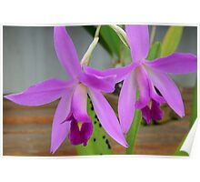 2 purple Orchids Poster