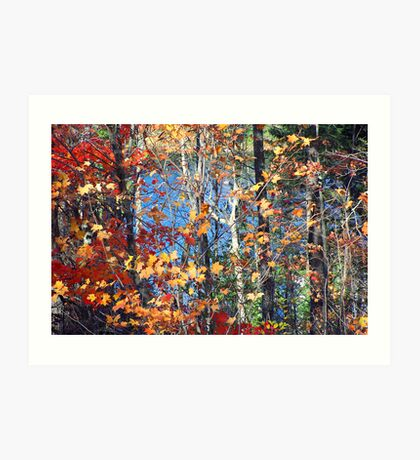 Autumn trees and water Art Print