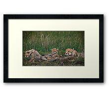 Cheetah's, Masai Mara, Kenya Framed Print