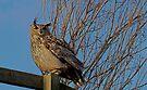 Big Owl III by Louise Fahy