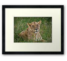 Lioness, Masai Mara, Kenya Framed Print