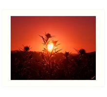 Tequilla Sunset Art Print