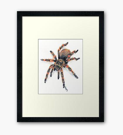 Mexican Red Knee Tarantula Framed Print
