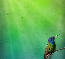 Humming by Cliff Vestergaard