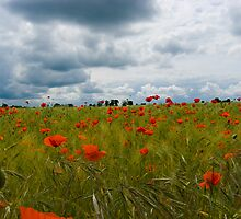 Poppy Field by Nigel Bangert