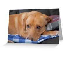 Millie a 3 year old labrador looking sad Greeting Card