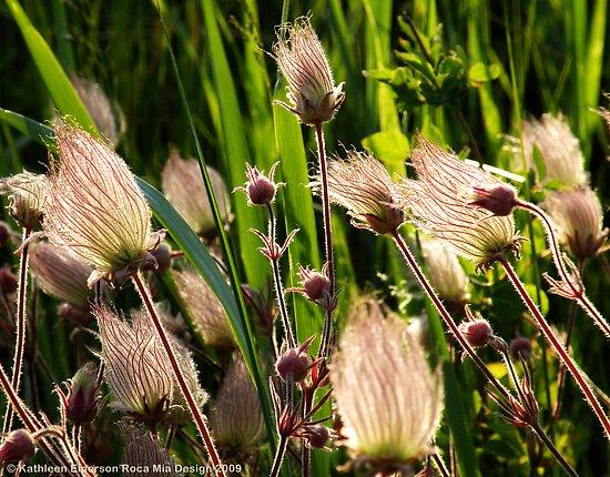 Wildflowers (Prairie Smoke) by rocamiadesign