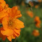 Orange Flowers by alina98